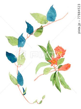 水彩で描いたザクロの花と野草の蔓 77884523