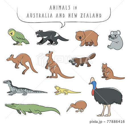 オーストラリアとニュージーランドの動物のイラストセット 77886416