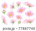 水彩で描いたコスモスのイラストセット 77887740