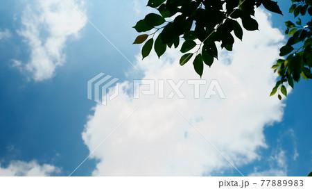 フィルムで撮ったかのような夏の青空と雲と木 77889983
