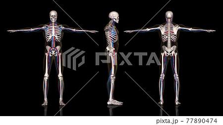 人体血管網方位別一覧 77890474