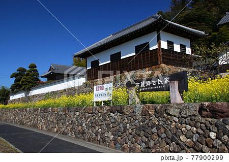 春の高麗郷古民家(埼玉県日高市) 77900299