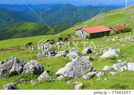 快晴下の四国カルスト(五段高原から見た姫鶴平) 77901057