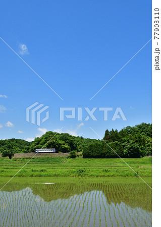 田植え後の水田の横を走る関西本線の列車 77903110