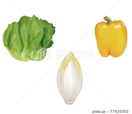 野菜イラスト_サラダ菜_チコリ_パプリカ 77920763