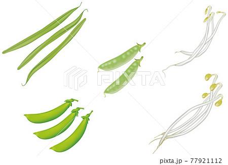 野菜イラスト_インゲン_スナップエンドウ_絹さや_豆もやし_もやし 77921112