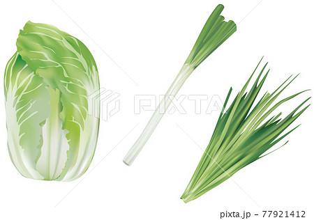 野菜イラスト_白菜_白ネギ_ニラ 77921412