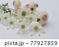 フランネルフラワーの花とフェルトのひつじ 77927859