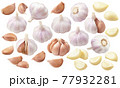 Big set of garlic. Bulbs, heads, cloves, segments isolated on white background 77932281