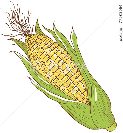 トウモロコシ 77935964