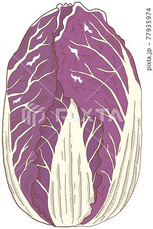 紫白菜 77935974