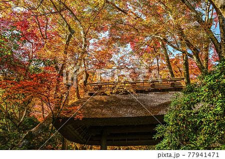 紅葉に染まる祇王寺(京都) 77941471