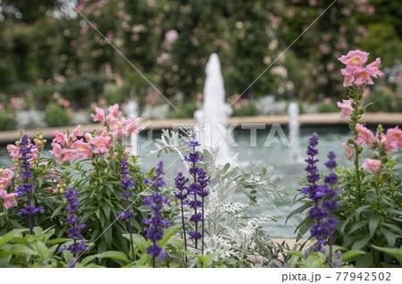 横浜イングリッシュガーデンの噴水 77942502