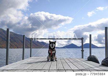 ポロピナイ湖畔 ボート乗り場の桟橋の黒柴 77945664