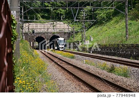 東海道線清水谷戸トンネルを抜けるサフィール踊り子号 77946948