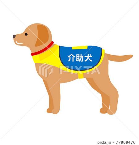 介助犬 77969476