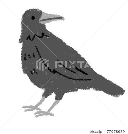カラス 鳥 動物 イラスト  素材 クレパス 77978029