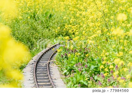 線路のある菜の花 77984560