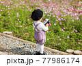 コスモス畑の前でシャボン玉で遊ぶベレー帽をかぶった男の子 77986174