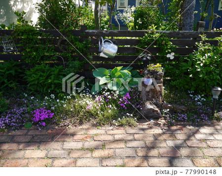 緑が濃くなり芝桜やクリーピングタイムが咲いた春の庭 77990148
