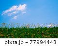 野花が咲く土手と空 77994443