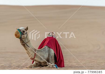 マスクを着用した砂漠のラクダ 77996385