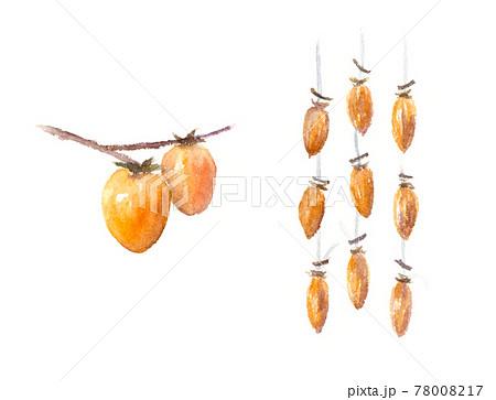 渋柿と吊るし柿、干し柿の水彩イラスト 78008217