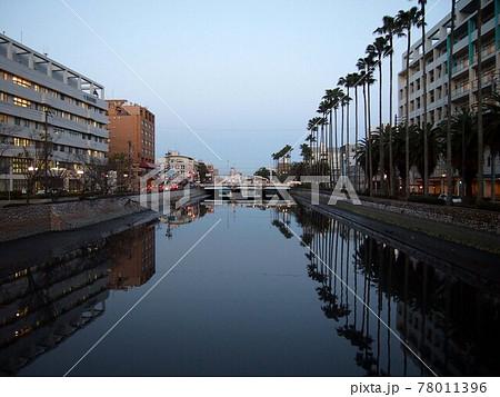 高知橋あたりの江ノ口川の夕景(暮れなずむ街とオウギヤシの並木) 78011396