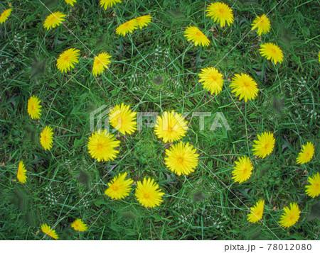 テレイドスコープで見たタンポポの花 78012080