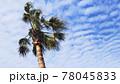 ヤシの木とうろこ雲 78045833