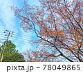 青空とオレンジ色の葉っぱの樹木と電柱がある風景 78049865