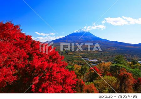 紅葉台展望台から望む富士山紅葉 山梨県鳴沢村 78054798