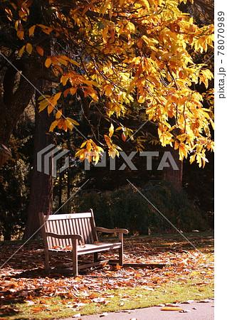 栗の木の下のベンチ ニュージーランド 78070989