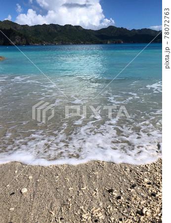 世界自然遺産の小笠原諸島 世界に誇る海の美しさ 78072763