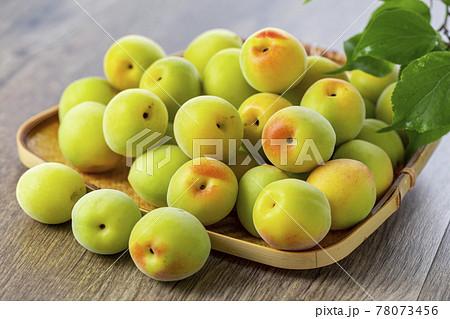 収穫した青梅 梅酒 梅シロップ 78073456
