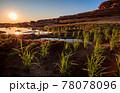 .Traditional rice field at Sam Pan Bok Grand Canyon, Ubon Ratchathani, Thailand 78078096