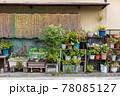 家の裏の壁際に造られた小さな植物園 78085127