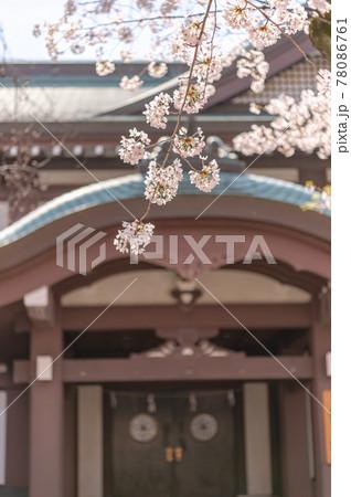 東京都千代田区九段の神社に咲く桜 78086761
