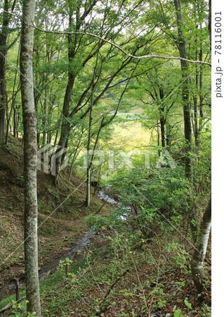 秋の日本の原風景:小川の流れる森林 78116001