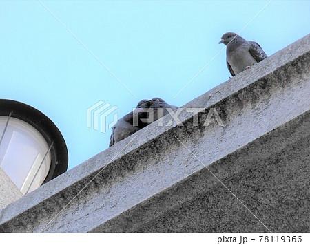建物の屋根の上で求愛のキスをしている鳩とそれを見つめる鳩 78119366