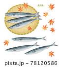 サンマの手描きイラスト/水彩タッチ 78120586