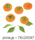 柿の手描きイラスト/水彩タッチ 78120587