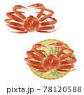 ずわいガニの手描きイラスト/水彩タッチ 78120588