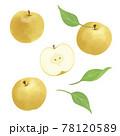 梨の手描きイラスト/水彩タッチ 78120589