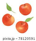 りんごの手描きイラスト/水彩タッチ 78120591
