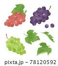 いろいろな葡萄の手描きイラスト/水彩タッチ 78120592