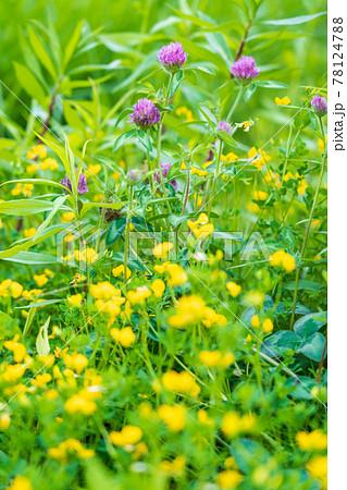 夏の野の花 78124788