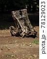 老木の日常 78129023