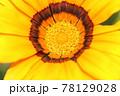 キンセンカのクローズアップ 78129028