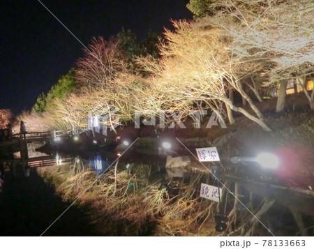 鏡のような水に映るライトアップされた木々 78133663